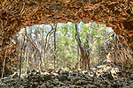Undara Volcanic National Park, Queensland, Australia;  trees and vines growing through the collapsed roof of The Archway, the entrance to one of the world's longest lava tubes