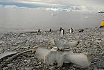 Antarctic Locations