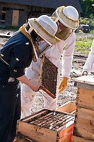 Urban beekeeping by Toronto Beekeepers Cooperative.