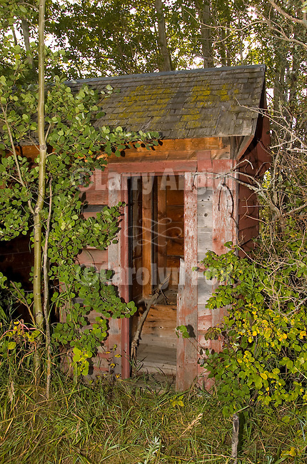 Faded red outhouse at end of shed with aspen trees, Alberta