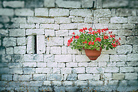Perlagonium in hanging basket on a stone wall.