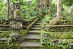 Monkey Forest, Ubud, Bali, Indonesia; moss covered stone stairs within the sanctuary