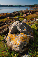 Boulder on Beach at Holbrook Island Sanctuary, Brooksville, Maine, US