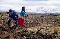Campesino farmers break sod on the Bolivian Altiplano near La Paz.