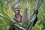 Umberto Alphonso grows pineapples in a church-supported community garden at Napkasiki, South Sudan. The project is a joint project of the Roman Catholic diocese of Tombura-Yambio and Caritas Austria, and helps families displaced by attacks from the Lord's Resistance Army to get restarted on land they once fled. They grow vegetables and fruit for their own consumption as well as to sell in nearby markets for cash, which they use to pay for medicines and school fees.
