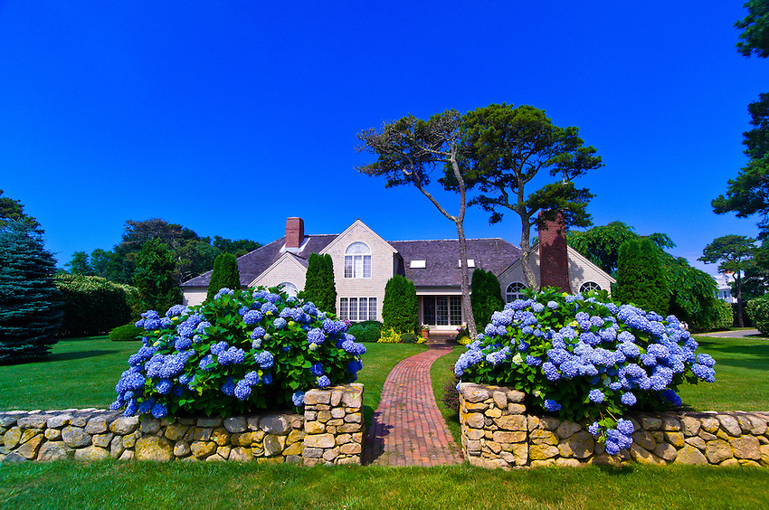 Home with hydrangea along Shore Road, Chatham, Cape Cod, Massachusetts, USA