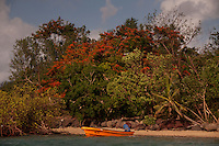 """Flamboyant """"Christmas"""" Tree and Orange Skiff, Turtle Island, Yasawa Islands, Fiji"""