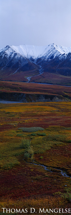 Snow caps the top of this mountain range in Denali National Park, Alaska, while autumn colors the tundra below.