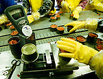 Cannery workers check the weight of salmon cans in Dillingham, Alaska, during the seasonal salmon run.