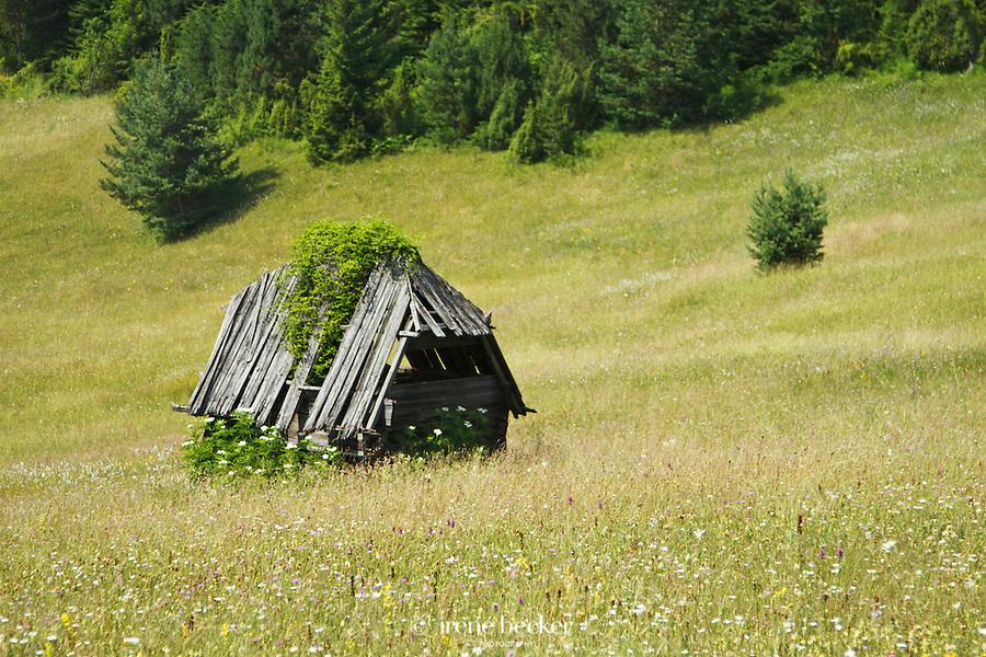 A sunny day near Mitrovac, Tara National Park (part of Dinaric Alps) Western Serbia.