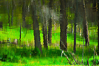 &quot;MEADOW MIRAGE&quot;<br /> <br /> Kootenai forest reflections in Tooley Lake, Montana. Dark tree trunks reflecting on water set in green grass<br /> <br /> T ORIGINAL 24 X 36 GALLERY WRAPPED CANVAS SIGNED BY THE ARTIST $2,500. CONTACT FOR AVAILABILITY.