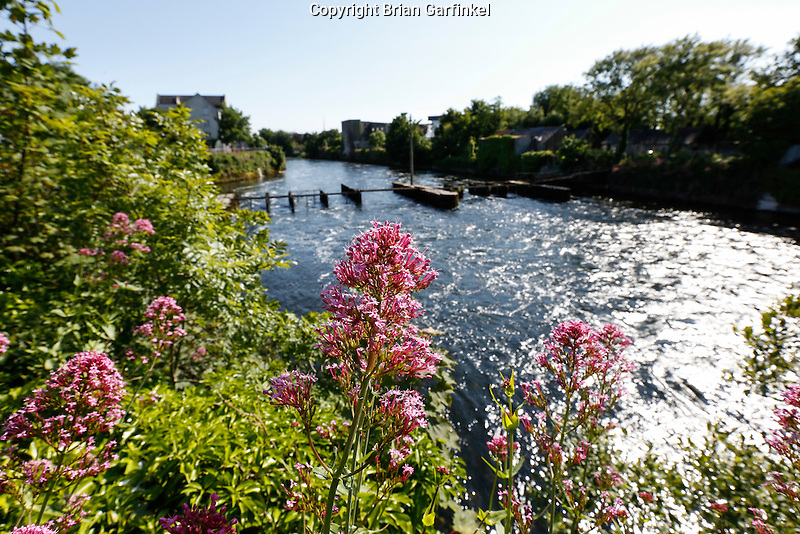Flowers are seen along the River Corrib in Galway, County Galway, Ireland on Monday, June 24th 2013. (Photo by Brian Garfinkel)