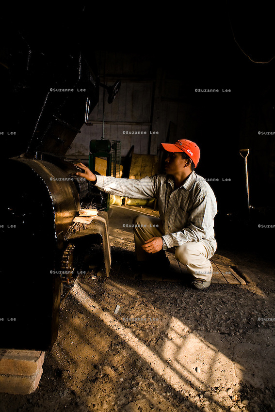 After rolling, the tea is fired in a drier, which is a large machine that is heated by a coal fire. This stops the fermentation process and dries the tea completely.