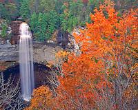 Autumn Maple & Oak Trees at Fall Creek Falls, Highest falls east of Mississippi River, Fall Creek Falls State Park, Cumberland Plateau, Tennessee