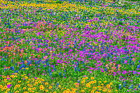 Texas wildflower landscape