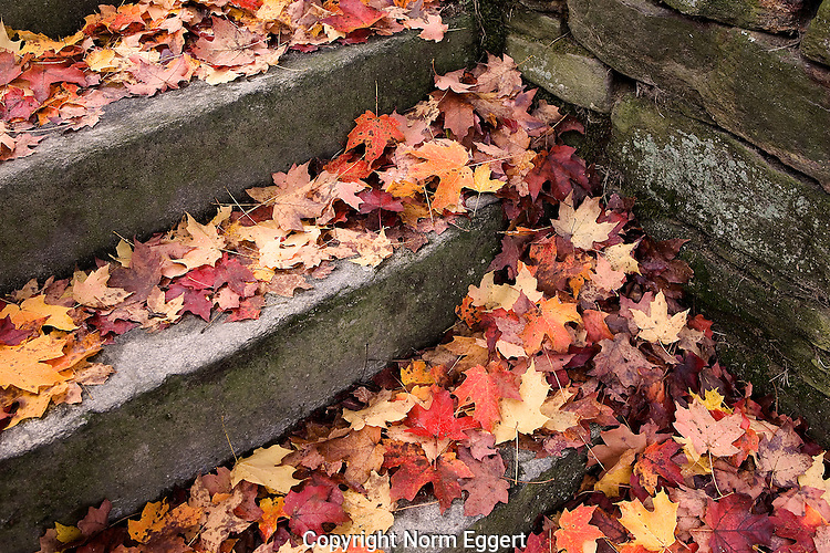 Colorful Leaves Fallen on Stone Steps