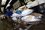 """An employee at the world's biggest fish Market in Tsukiji, Tokyo carries large tuna auctioned at the market. More than 2,300 tons of fish -- about one-third of the total consumed in Japan -- passes through Tsukiji each day and offers more than 450 varieties of marine products. The market, which dates back almost 75, will move to a high-tech site on a man-made island in Toyosu, which is well-documented as being contaminated with benizine. Not that Tsukiji is much better off -- many buildings in the aging site are stuffed with asbestos. """"Choose your poison,"""" says one Tsukiji official. The new site, which the government plans to be readied by 2012, will be significantly larger, with more room for off-loading and for sellers to display their goods. The current location, says one official, is too cramped and collisions between motorised carts and pedestrians means accidents occur almost daily. Meanwhile, with fish sales down, it is becoming more difficult to justify Tsukiji's prime location and property developers are keeping a close watch on Tsukiji land, which is just a few blocks from the ritzy Ginza district of Tokyo, where per-meter land prices are the highest in the world..The move to the new Toyosu location, meanwhile, has been at the center of heated debate -- clean-up operations alone are estimated to cost ¥67 billion (around US$660 million), with a further ¥450 billion to build a new marketplace. Big wholesalers favour the move, but the 1,600-plus merchants mostly are against it. Yoshiharu Kiku, a Tsukiji storeowner who began working at the market 60 years ago, expresses bewilderment at the plans, saying that the name Tsukiji itself has become synonymous with the world's best and most eclectic selection of fish. """"This place has a long tradition. Why break it and start from scratch all over again?"""" he says. """""""
