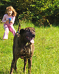 Young girl struggles with big dog on leash in park.