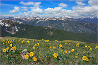 "On a hike to James Peak, one of the the Front Range's 13,000 feet high mountains, I paused to take in the view. From high above town of Winter Park and the Fraser Valley, these golden sunflowers - called ""Old Man of the Mountain"" reached for the rising sun in the east. In the distance, you can see the Winter Park ski runs. In the far distance is Mount Evans, one of Colorado's 14ers. This Colorado image was taken from the James Peak Trail on a beautiful summer morning."