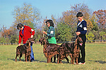Irish Setters & Owners At Dog Show