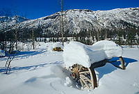 Old Homestead, Wrangell St. Elias mountain range, Wrangell St. Elias National Park, Alaska