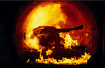 Europe, Britain, Midlands. Mad Cows 'BSE' Crisis. Incineration of beasts suspected of BSE. The burnt remains will be put into landfill sites. 1996.'MEAT' across the World..foto © Nigel Dickinson/