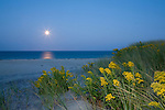The rising harvest moon adds to this image of flash-touched goldenrod.