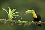 Costa Rica's Rainforests