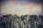 Textured image of migrating birds in autumn