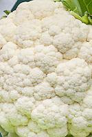 Cauliflower 'Boris' vegetable, closeup of florets and head