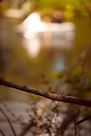 shallow depth of field image of a rowing boat on a lake