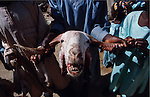 Africa, Nigeria, Kano State, Kano. Goats head a speciality for the Muslim Hausa population. 2003.'MEAT' across the World..foto © Nigel Dickinson