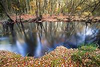 Shoal Branch, Pine Barrens, New Jersey