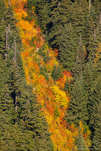 Fall Color Falls, Mount Rainier National Park, Washington