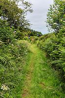 Cumbria, England, UK, near Carlisle.  Hadrian's Wall Footpath.