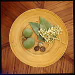 Kukui nuts displayed as dried, freshly harvested and with their flowers.