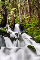 Waterfall in rainforest along Power Creek Road, Cordova, Chugach National Forest, Alaska.