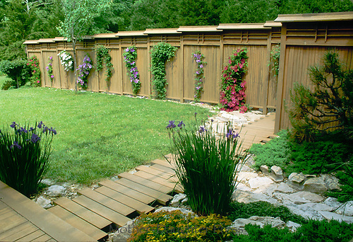 Custom wooden fence with clematis vines creates privacy for yard and gardens