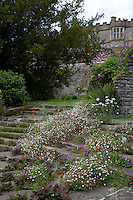 Stone steps overgrown with weeds at Haddon Hall