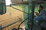 Halstead Kansas Wheat Harvet