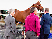 HALLANDALE, FL JANUARY 28: Alan and Art Sherman inspect California Chrome after his poor performance in the $12,000,000 Pegasus World Cup Invitational at Gulfstream Park Race Course on January 28, 2017 in Hallandale Beach, Florida. (Photo by Arron Haggart/Eclipse Sportswire/Getty Images)