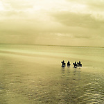 A calm sea with four people riding horses