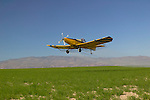 Crop duster spraying an alfalfa (Medicago sativa) field in Canyon County, Idaho