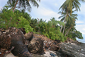 Coconut trees lay dead on the beach, after falling over due to the erosion of the land around their roots by the ever increasing sea level, on the South Pacific island of Kiribati.