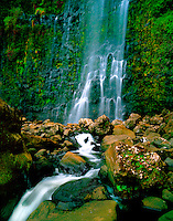 """Papa'aloa Waterfall: Interesting lichen and ferns cover the boulders at the base of a huge waterfall in Papa'aloa, Hawai'i Island. Shot on 4x5"""" transparency film, available only as a fine art print."""