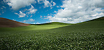 Shades of green in the Palouse Valley