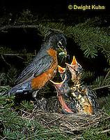 Robins - Life Cycle