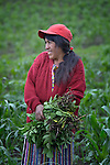 Gloria Ventura works in her farm field in Buena Vista Bacchuc, a small Mam-speaking Maya village in Comitancillo, Guatemala. She is part of a women's agricultural group that is assisted by the Maya Mam Association for Investigation and Development (AMMID).