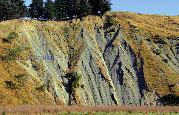 Turbidite strata beds almost vertical (flysch). Near Hastings, New Zealand.