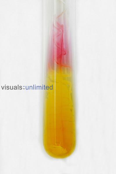 Glass test tube containg an unknown yellow liquid. Royalty Free